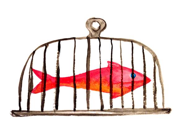 peixe_enjaulado-web