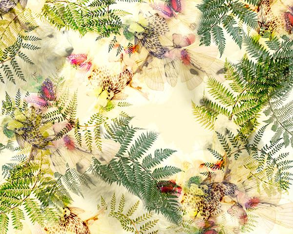 borboletas-web